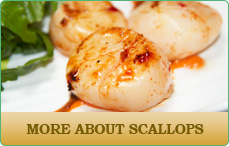 Dave's Seafood - Scallops